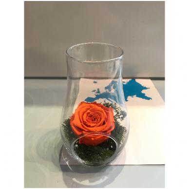 Mieganti rožė stikle